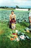 Massive food grant helps a ministry make a difference in Guatemala.
