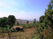 Rains Ravage Burundi's Food Supply