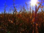 Heat wave continues to wreak havoc across Europe