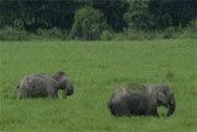 Elephants destroy two believers' homes