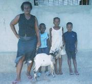 Hunger affecting Haiti goat project