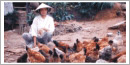 FARMS International starts needed program in Cambodia
