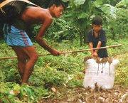 Rat plague hits Myanmar hard