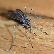 WHO warns of spread of Zika virus, dangers to pregnant women