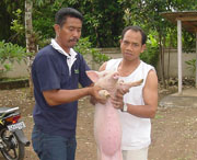 Pigs help share the Gospel