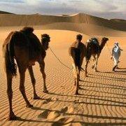 Crescent Project holds Sahara Challenge