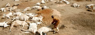 AfricaHorneDrought2011