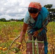 Gardens program keeps hunger, terrorists at bay in India