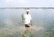 Island residents saved by grasses and hope in India