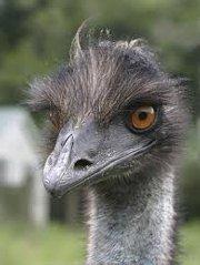 An Emu farm has opened up many doors