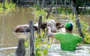 Bosnia flooding called historic (TWR photo).