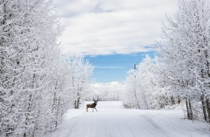 -15 Farenheit is the average temperature in Yellowknife during the cold, dark month of January. Pray for hardy missionaries who can live and thrive in these conditions. (Photo, caption courtesy SEND North via Facebook)