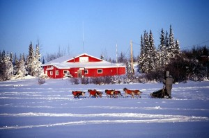 SEND-North_dog-sledding