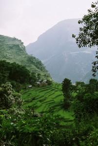 Terrace farming in Nepal (Wikipedia)
