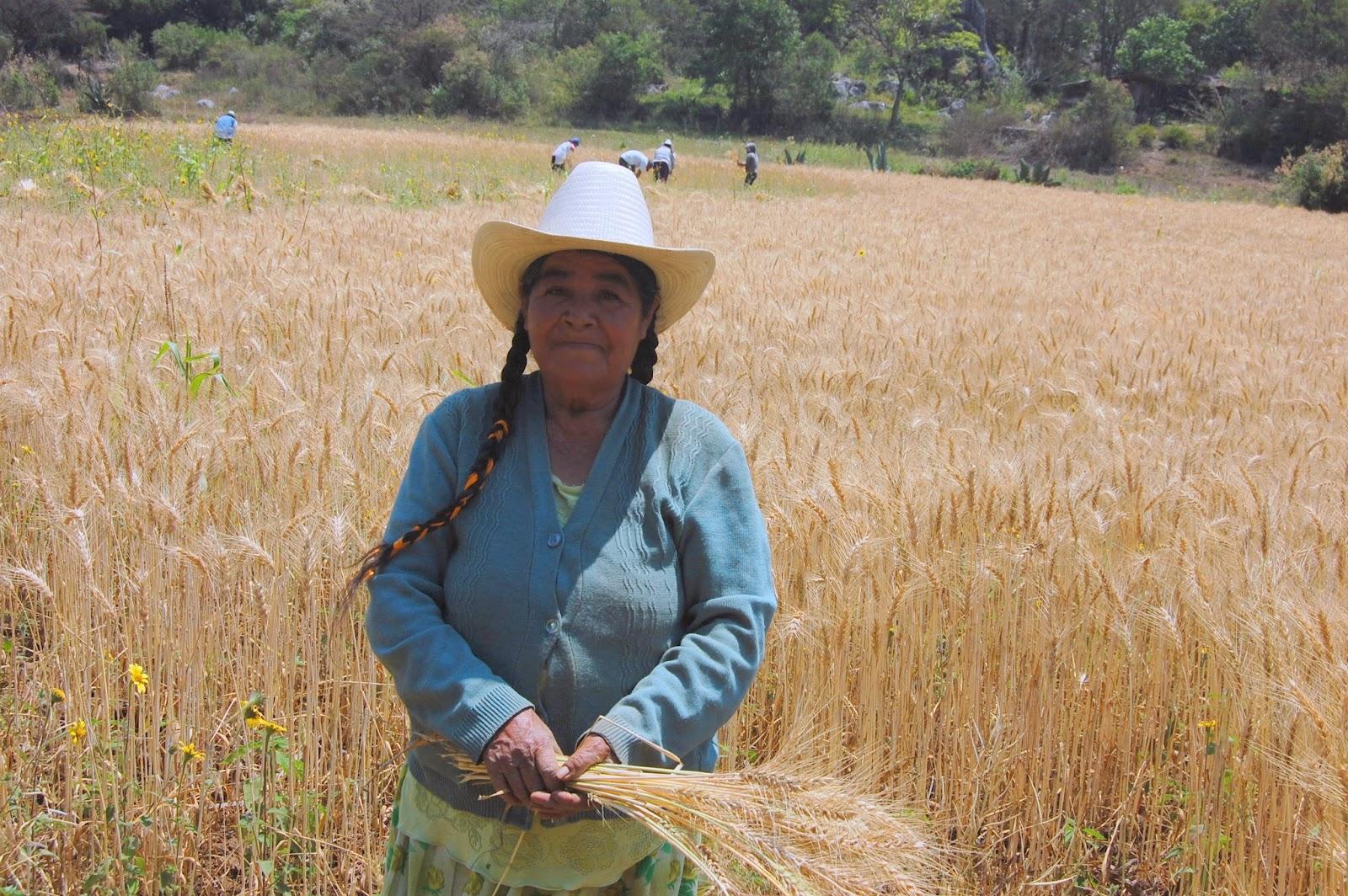 Oaxaca Gospel growth encourages ASM