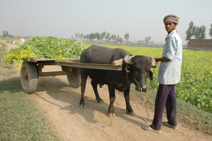 Suicide rates climb among Indian farmers