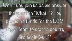 what if no funding_get chickens