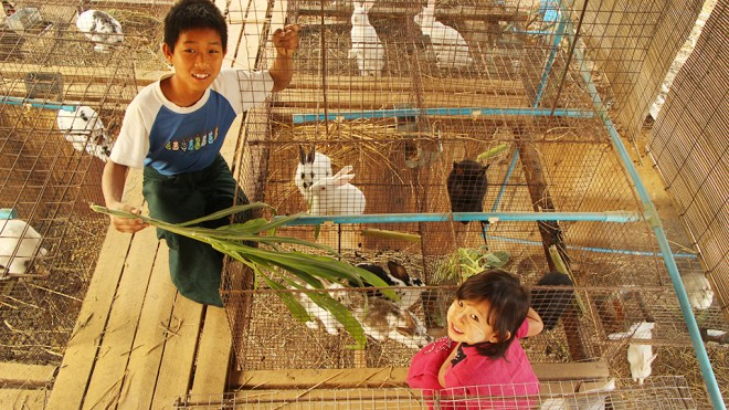 Bunnies teach kids how to live in Southeast Asia