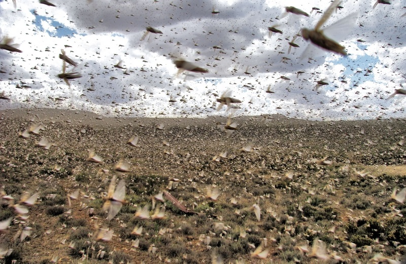 Between coronavirus and locusts, Kenya's rural communities overwhelmed