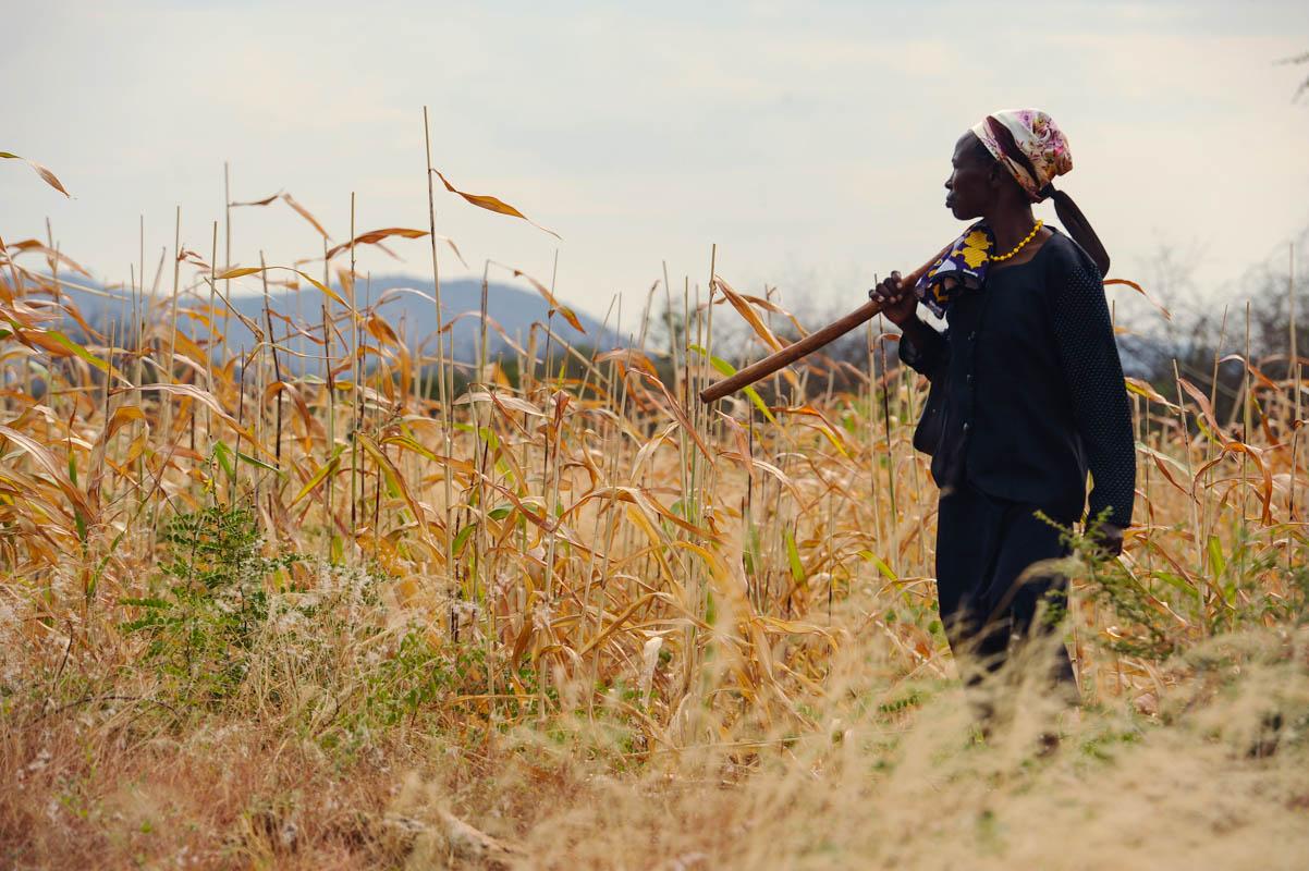 Ethiopia's drought: deja vu?