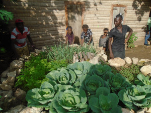 Dieuseul ANGER lives in Belladere, Haiti. He has twelve (12) kids. He was able to help his family thanks to the implementation of a keyhole garden