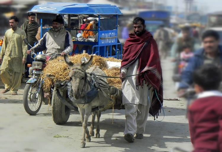 Suicide bomber kills 26 in Pakistan