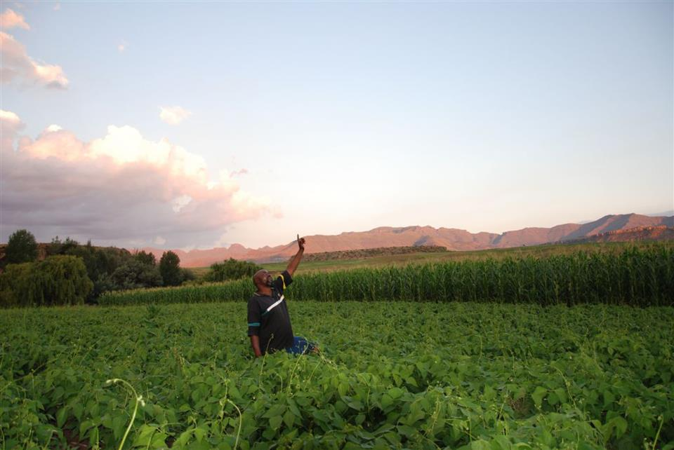 A farming technique changing lives in Africa