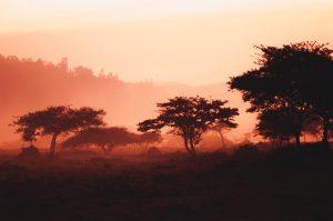 Rwanda, Africa, trees
