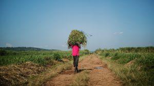 rwanda, farmer, crops, land
