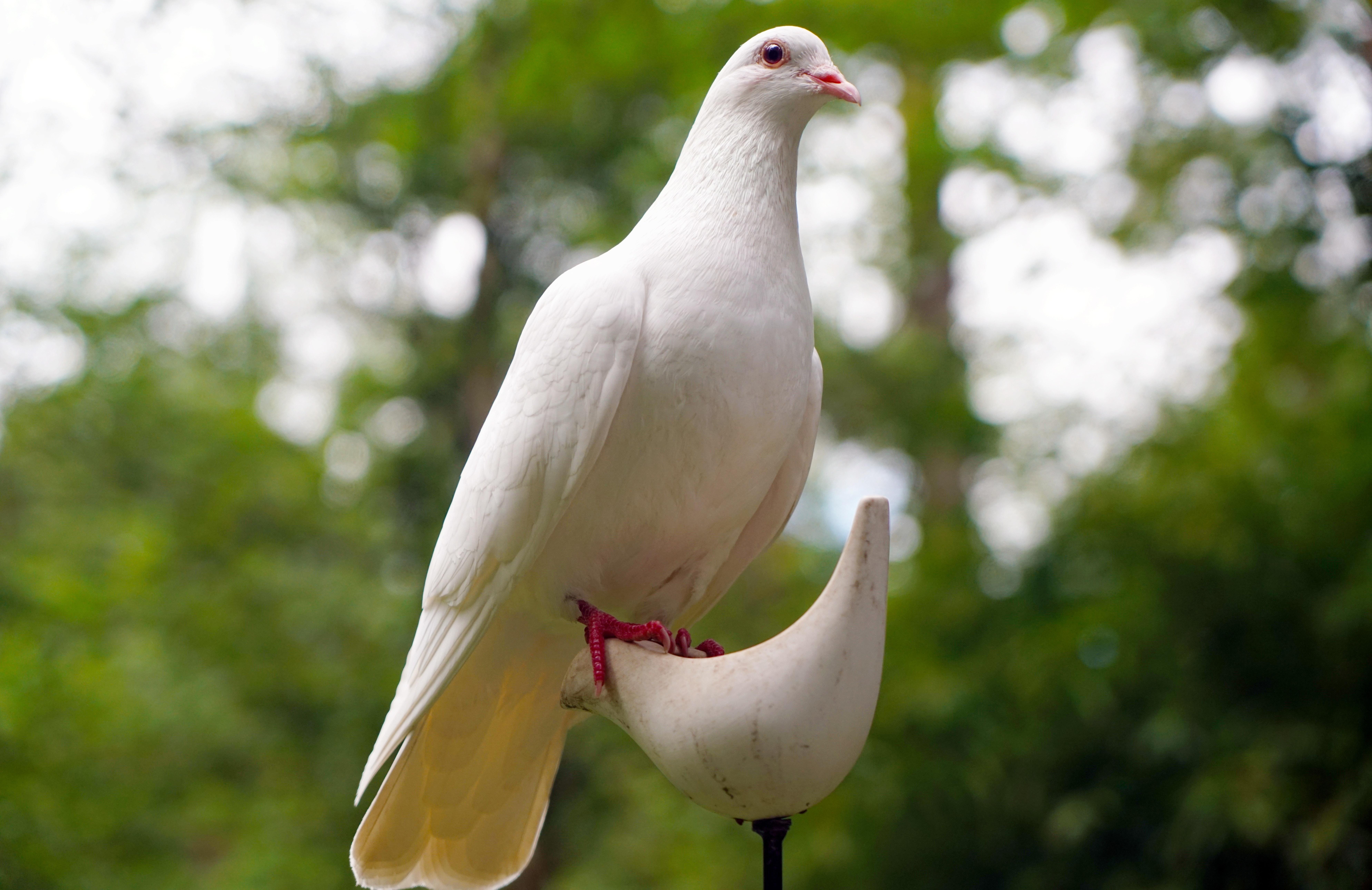 Innocent As Doves