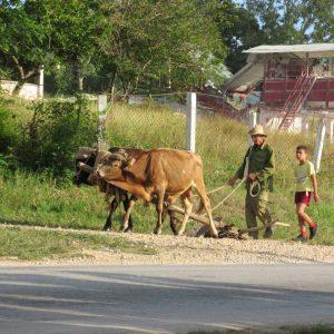 Cuba, farming, loans