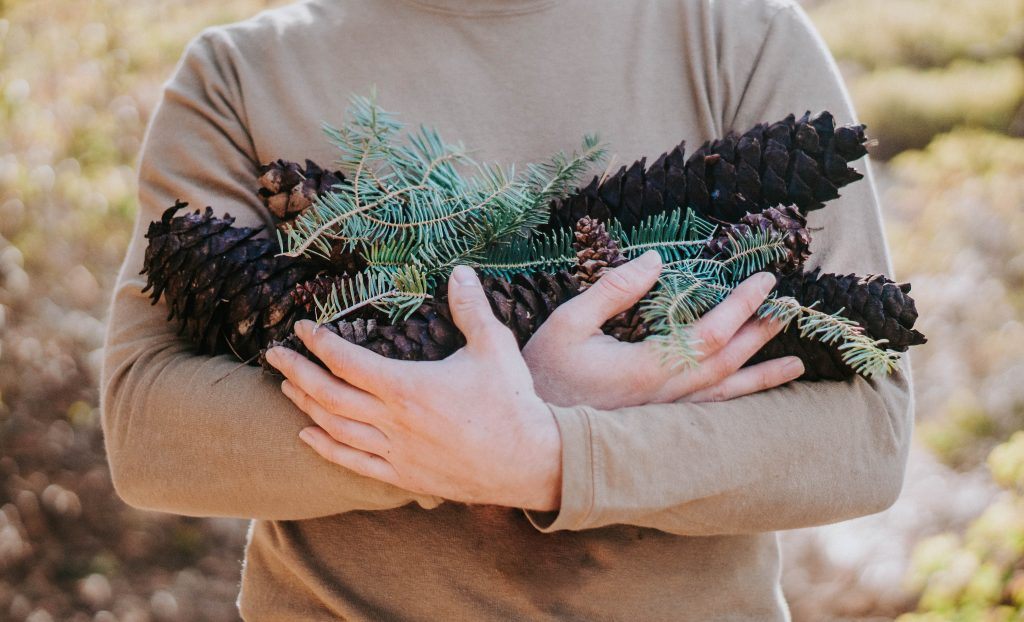 christmas, winter, hands, pinecones, evergreen branches