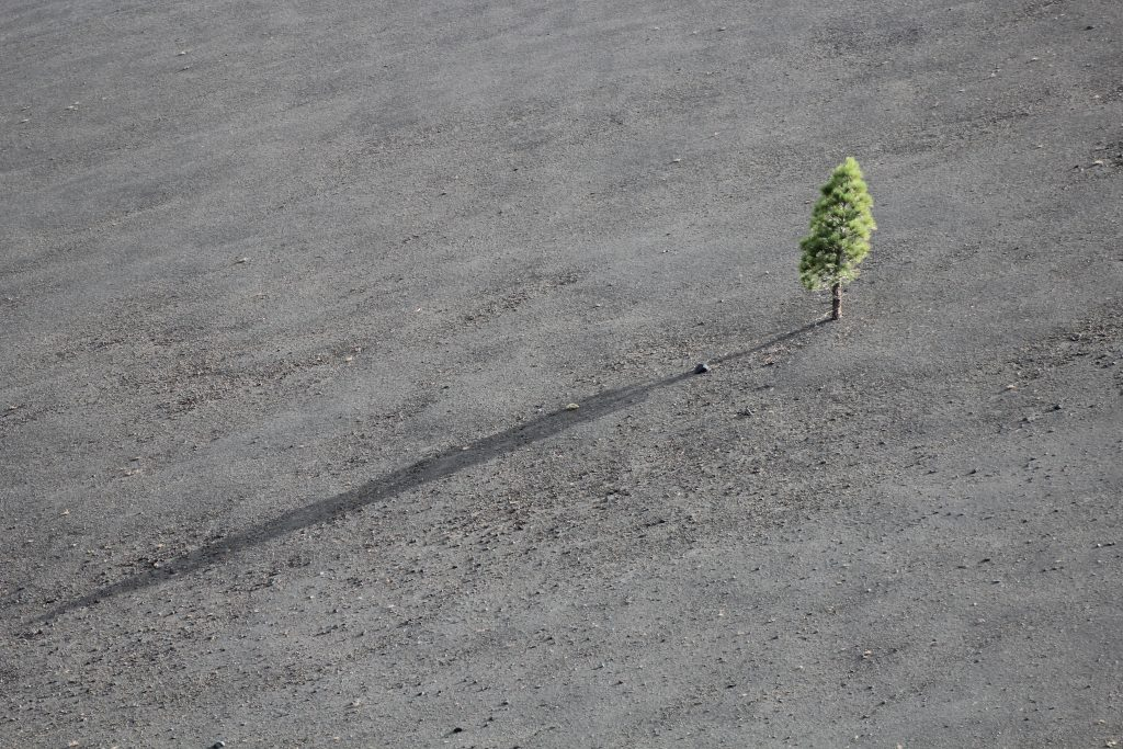 lonely, sad, hope, tree