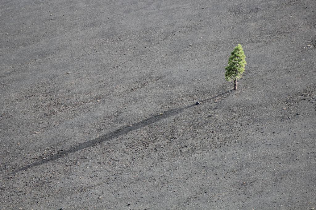 lonely, sad, hope, tree