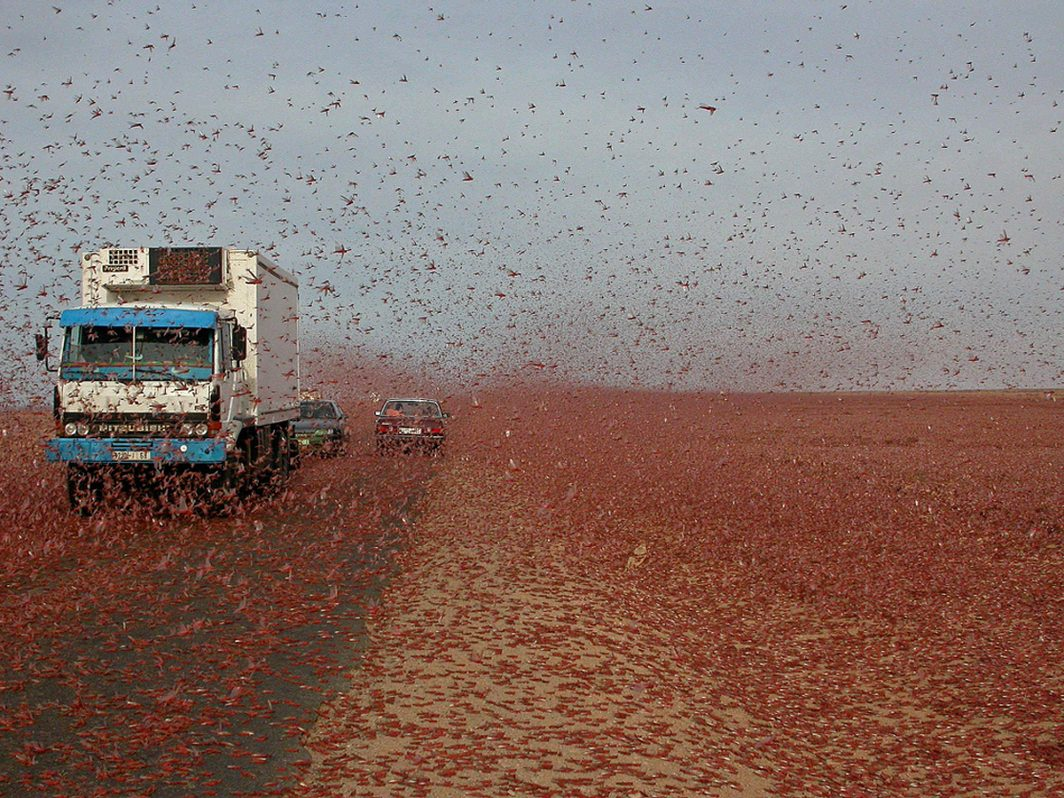 Christians respond as desert locusts devour and destroy