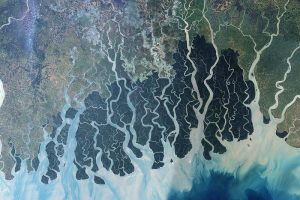 A satellite image showing the Sundarbans. (Photo courtesy of Wikimedia Commons)
