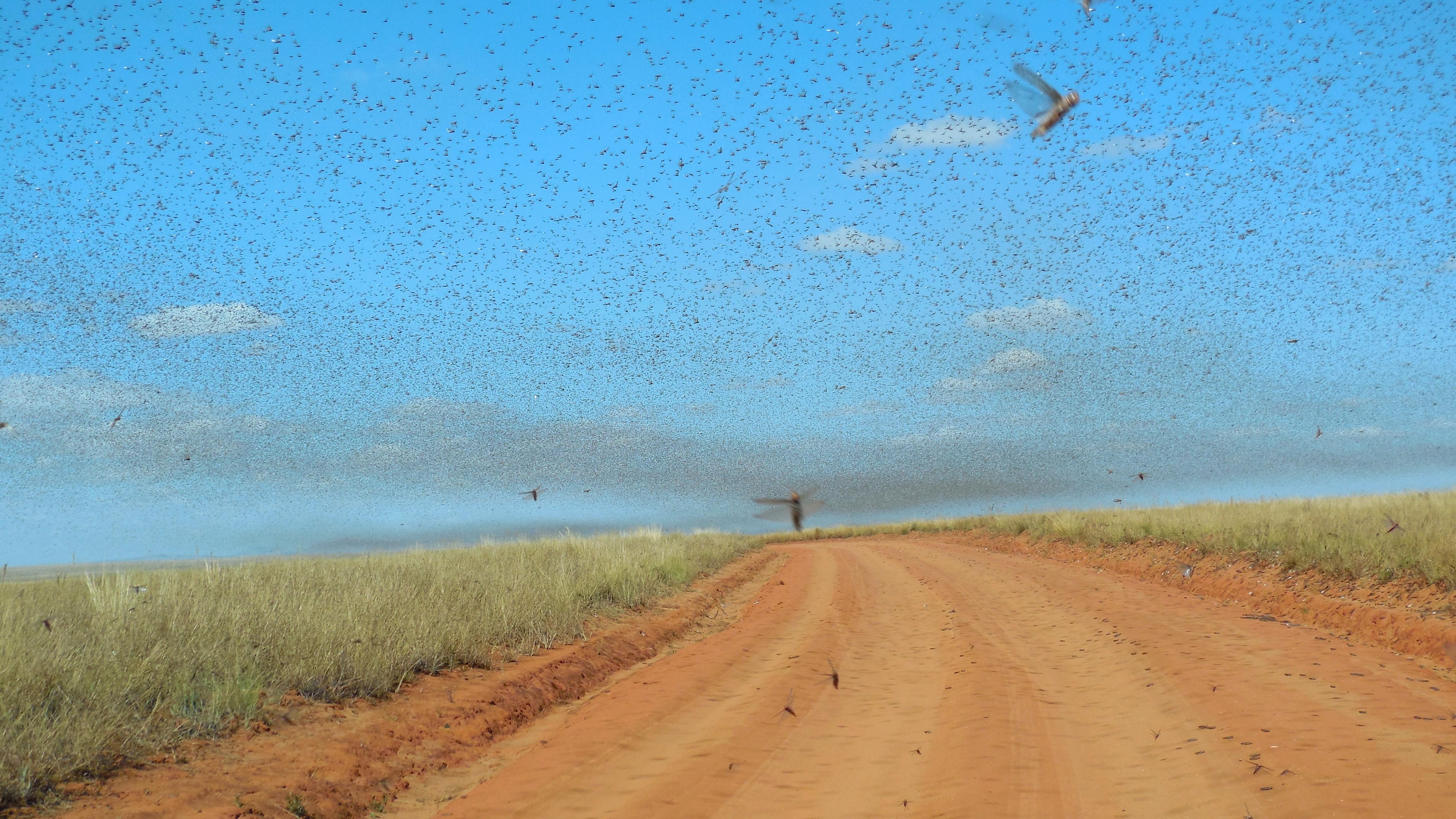 Kenya braces for returning locust swarms