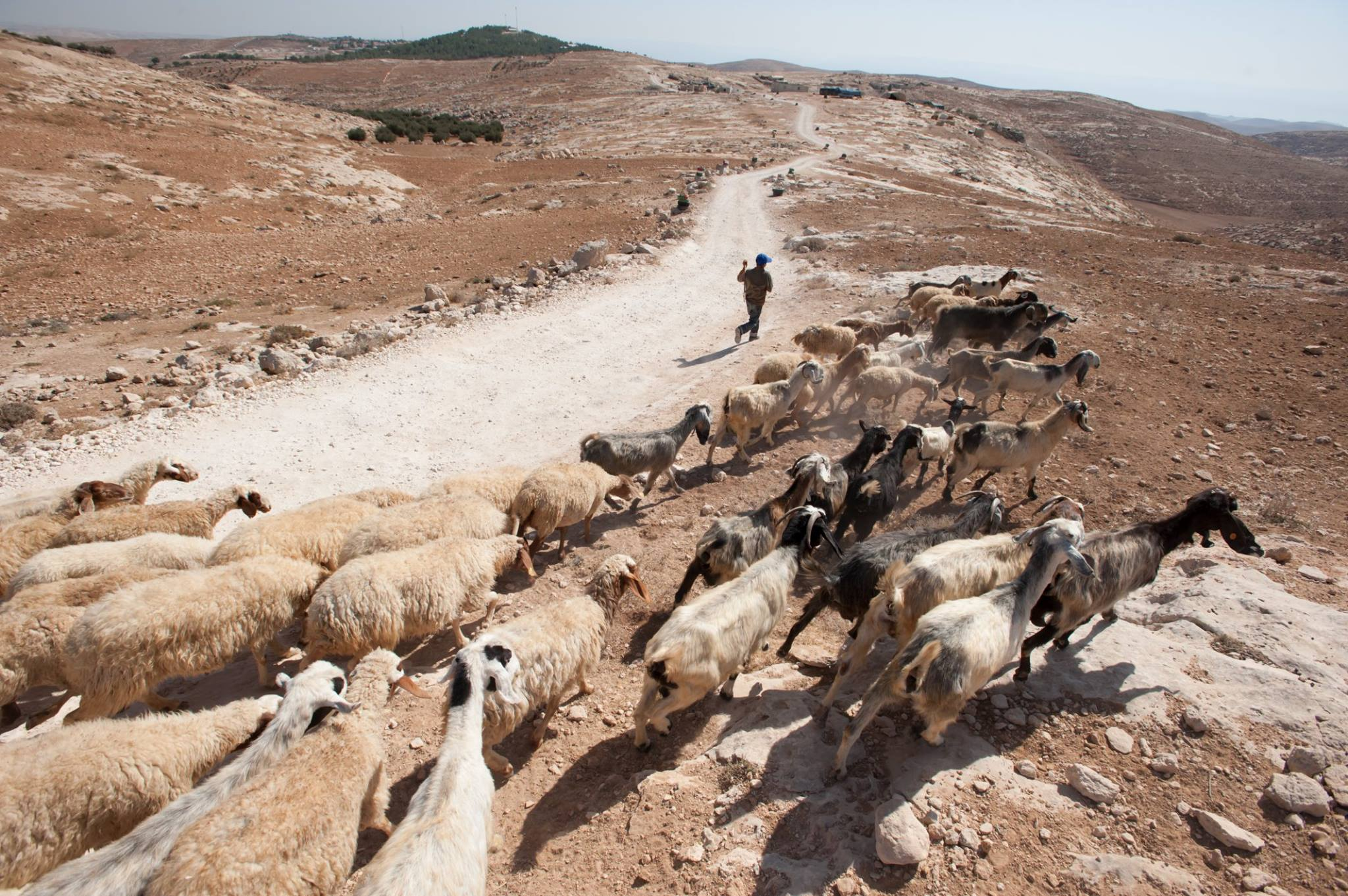 The Shepherd Society helps the marginalized in Palestine