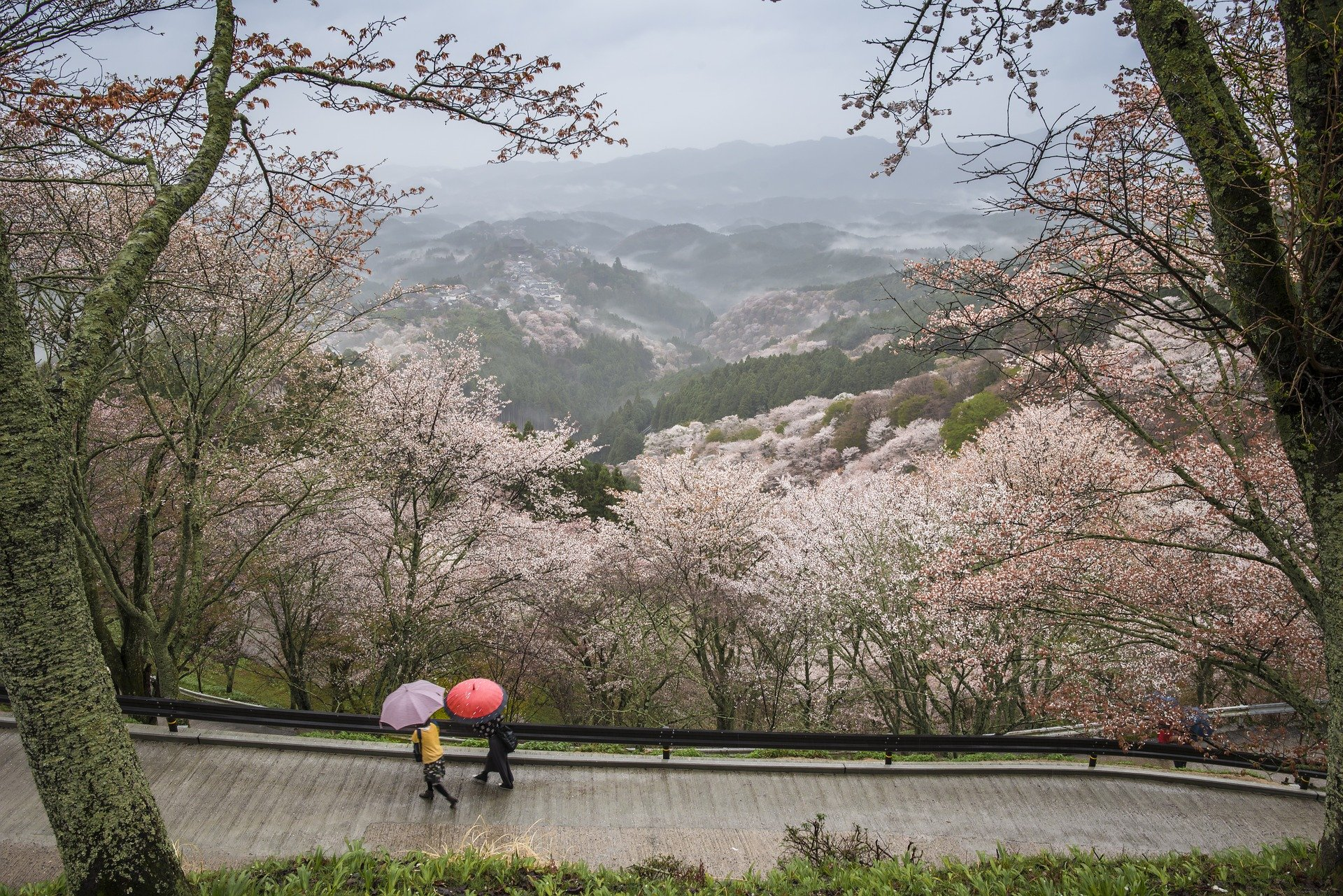The header photo shows cherry blossoms in Japan. (Photo courtesy of Kanenori on Pixabay)