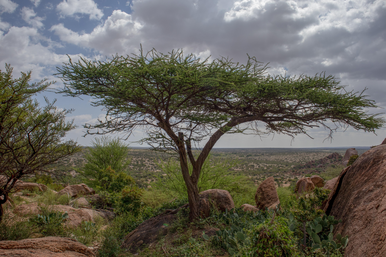 FMI moves towards ministry in Kenya, Somalia