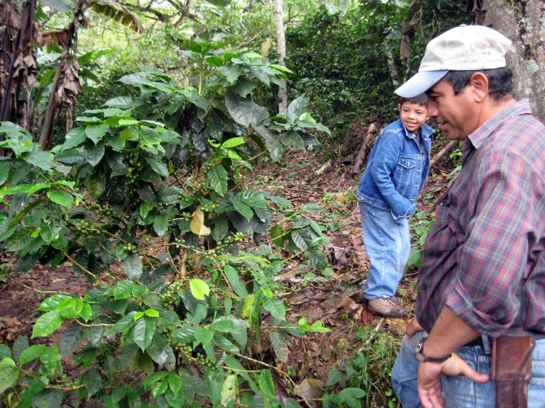 Mexican drought disrupts farming